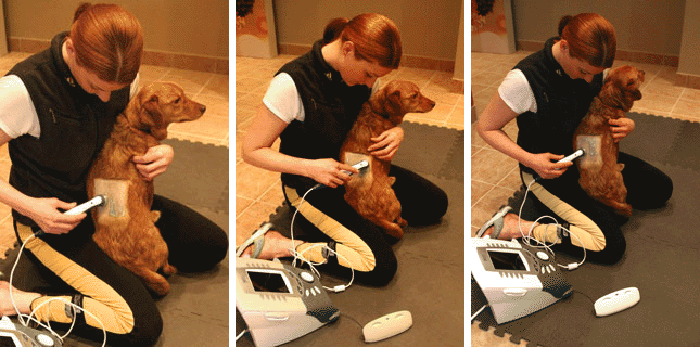 Therapeutic Ultrasound for Dogs