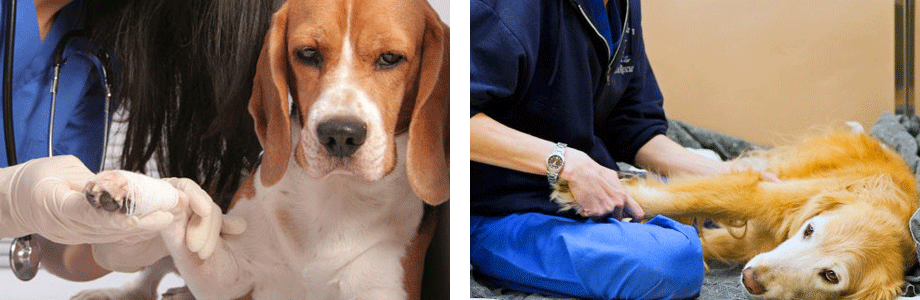 Animal Rehabilitation Therapeutic Exercises