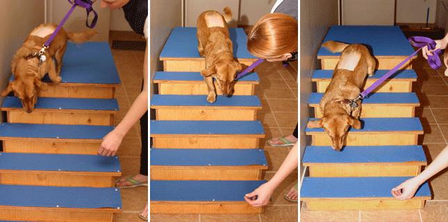 Animal Rehabilitation Therapeutic Exercises
